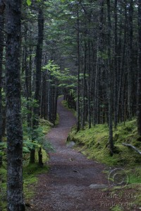 Quoddy Coastal Trail
