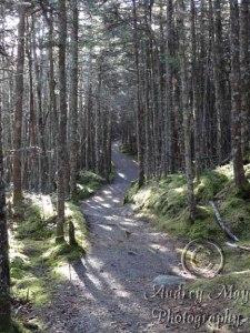 Quoddy Coastal Trail (Bright)