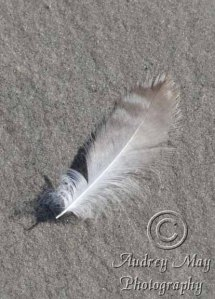 White and Brown Feather