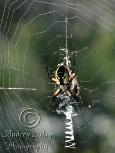 Welcome Back, Huge Spider