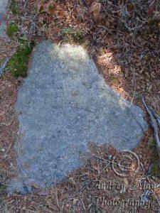 Maine Shaped rock