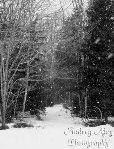 Winter on the Birch Point Trail