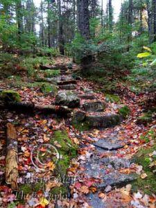 Moose Cave Stairway