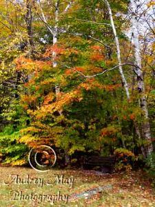 Screw Auger Falls Park Bench