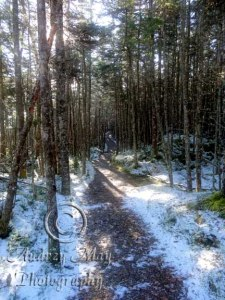 Dreamy Quoddy Trail