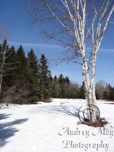 PMWR - Birch Point Trail Snow