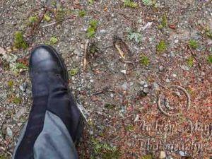 Moose Track - Foot Size Comparison