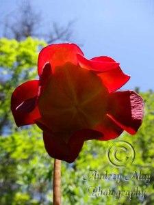Strange Plant (underside)