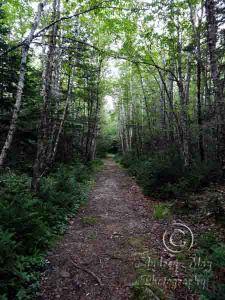 Birch Point Trail