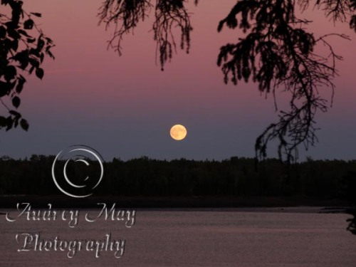 Moonrise at Cobscook State Park