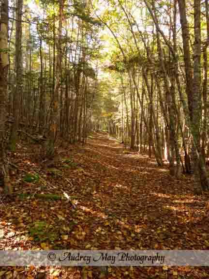 Quoddy Inland Trail 1