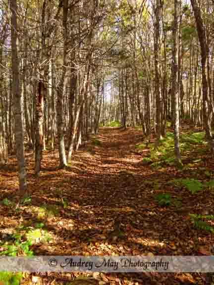 Quoddy Inland Trail 2