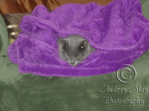 Kenzi the Blanket Thief
