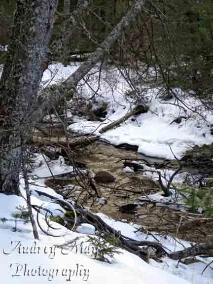 Roque Bluffs Trail