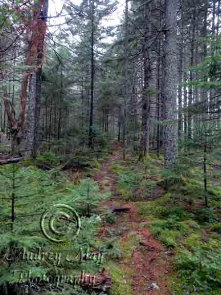 Eagle Hill Institute Trails - Border Trail