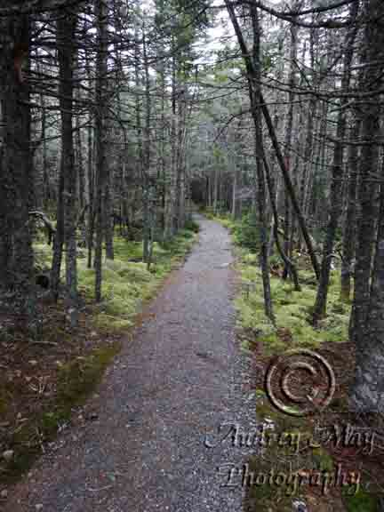 Snowless Quoddy Trail