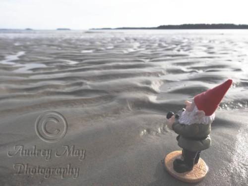 Gnome Photographer