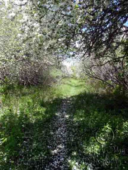 Faerie Land Trail 1