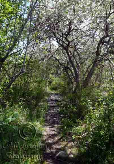Faerie Land Trail 2