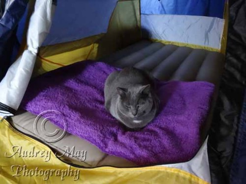 Cat Stole My Tent!