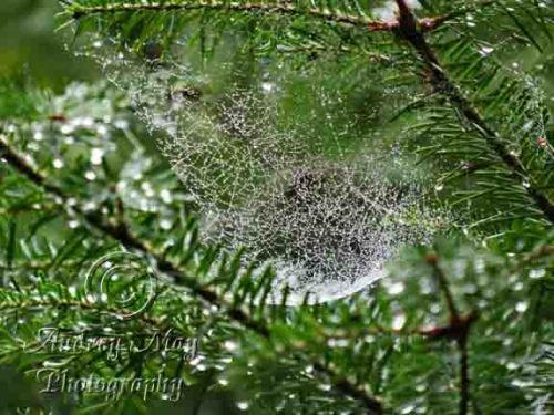 Rain Covered Spider Web