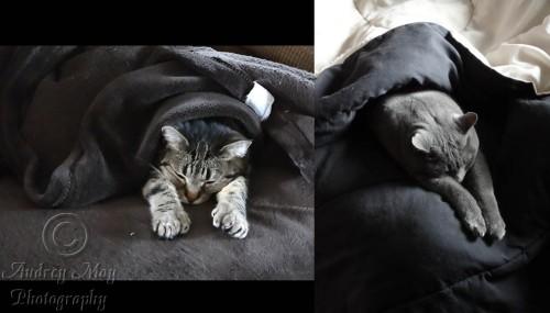 Lazy Spoiled Kitties